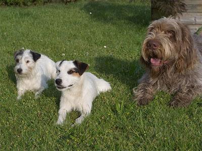 Cyrah, Astor & Aldo