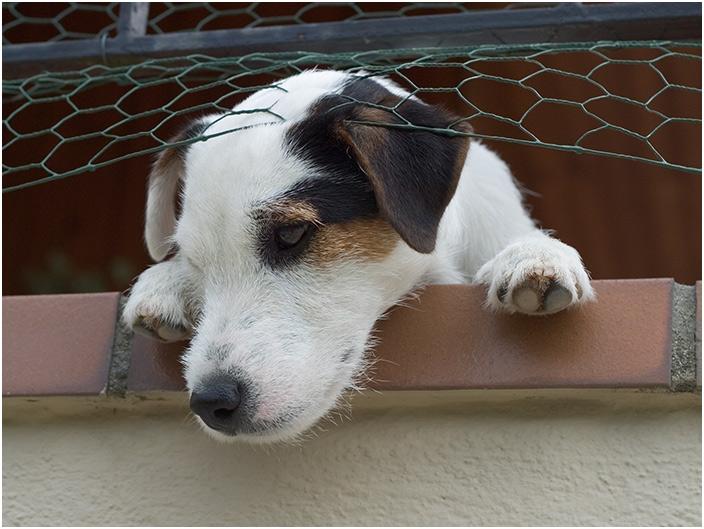 Astor riskiert einen Blick vom Balkon herunter.
