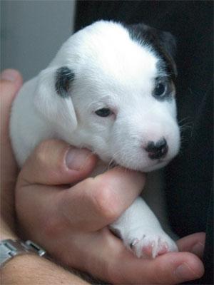 Astor - 4 Wochen alt