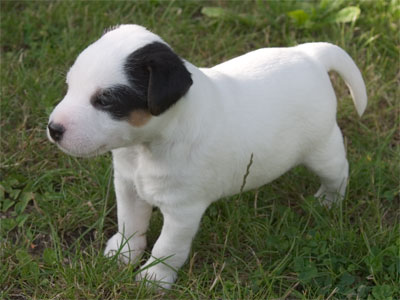 Astor - 5 Wochen alt