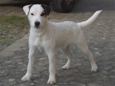 Astor - 9 Monate alt