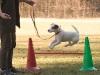 Astor auf dem Hundeplatz
