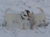 Bix im Schnee