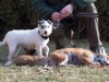 Cyrah und ihr zwanzigster gesprengte Fuchs