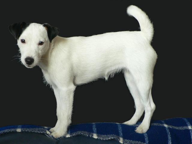 Dee Dee (genannt Tutu) mit ca. 6 Monaten