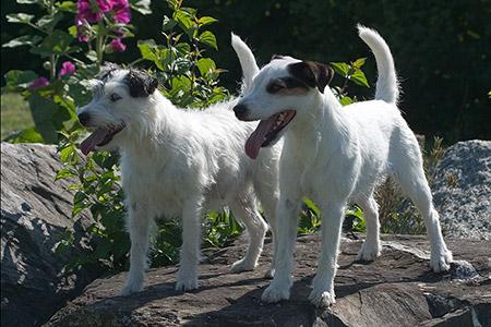 Cyrah und Astor